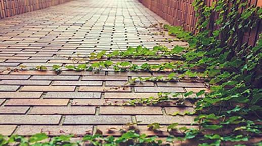 maintaining brick pavers